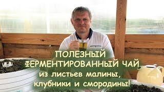 СЕКРЕТЫ ФЕРМЕНТИРОВАННОГО ЧАЯ ОТ А ДО Я - Андрей Гренок