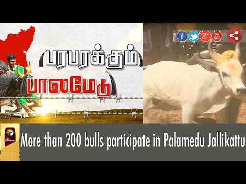 More than 200 bulls participate in Palamedu Jallikattu | Live report