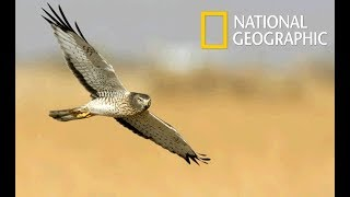 Wild Arabia - Hidden Deep in the Desert | Aerial Masters (Nat Geo Wild)