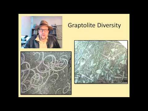 What Are Fossil Graptolites And Why Are They Useful In Geology