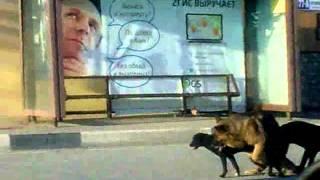Собаки жгут!!!!