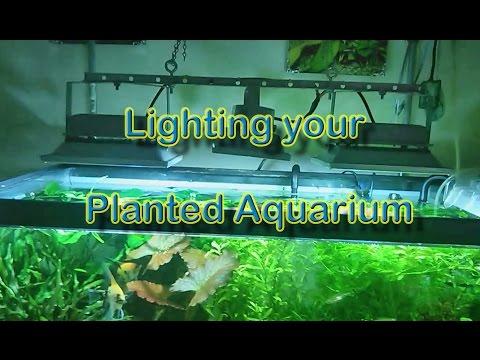 Lighting a Planted Aquarium