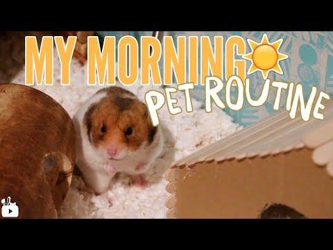 MY MORNING PET ROUTINE 2017