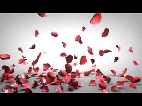 anh dong dep Effect Background rose petals falling Free Background Video Falling Rose Petals HD