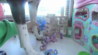 Littlest Pet Shop: DOGZILLA [500 Subs Video] (Featuring My Dog Molly and InuyashaSkittles831)