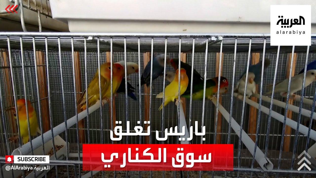 باريس تقرر إغلاق أشهر وأقدم سوق للطيور.. وتجاره متخوفون من الإفلاس  - نشر قبل 2 ساعة