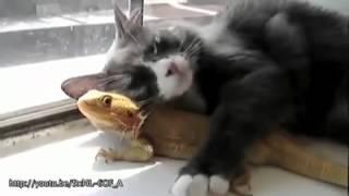забавные животные видео
