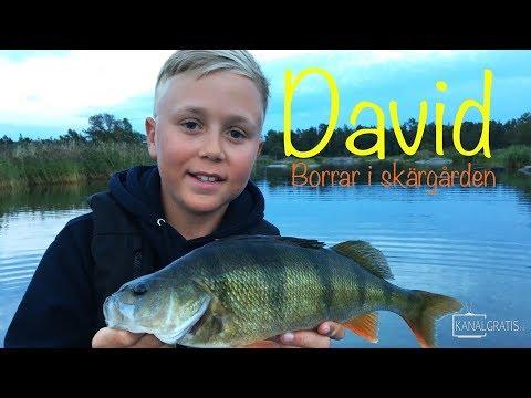 PERCH FISHING in the BALTIC SEA - David's Predator Fishing (English subtitles)