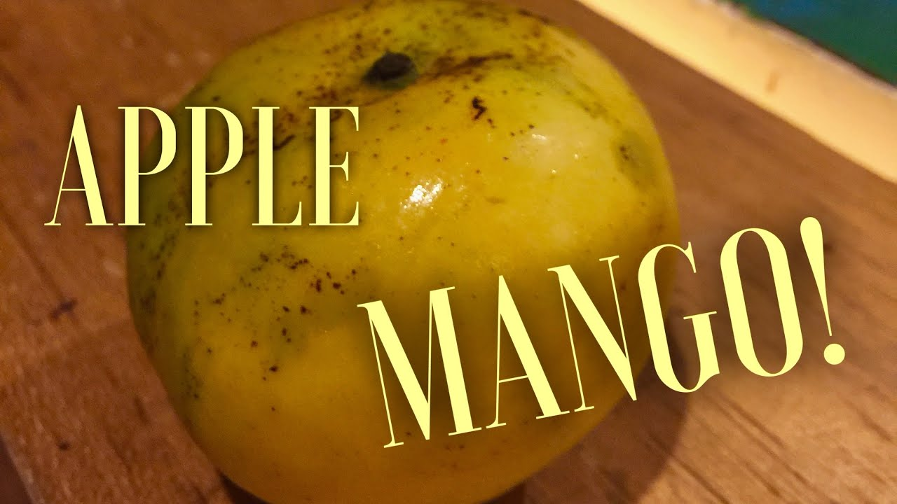 Apple Mango !! How To Eat And How Does It Taste?