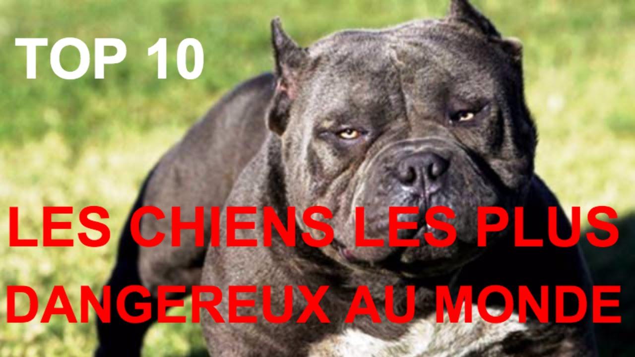 Top 10 Photos des chiens les plus dangereux du monde