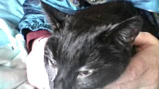 Pantha March 29 2016 day she died