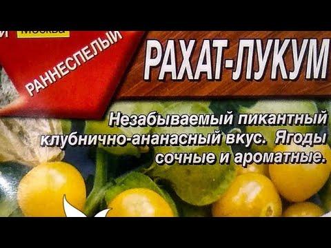 Физалис ягодный сорт Рахат-Лукум. Самый компактный и зимостойкий.
