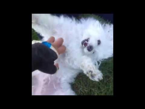 funny dogs video compilation 2017
