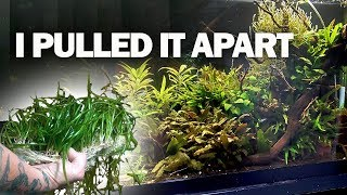 They were the WRONG plants!!! And a goldfish update