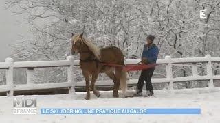 ANIMAUX : Le ski joëring, une pratique au galop