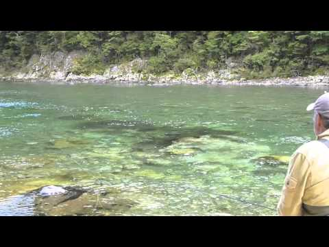 Cicada Fishing For Big New Zealand Trout.mov