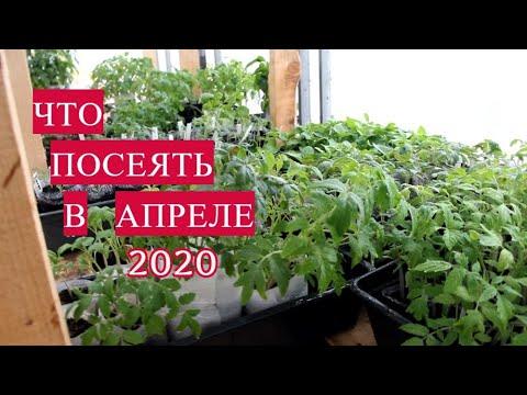 Вопрос: Что посадить на рассаду в июне 2020 года?