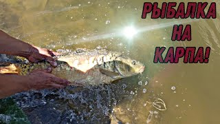 Рыбалка на карпа Ловля карпа Рыбалка 2021 Рыбалка в харьковской области
