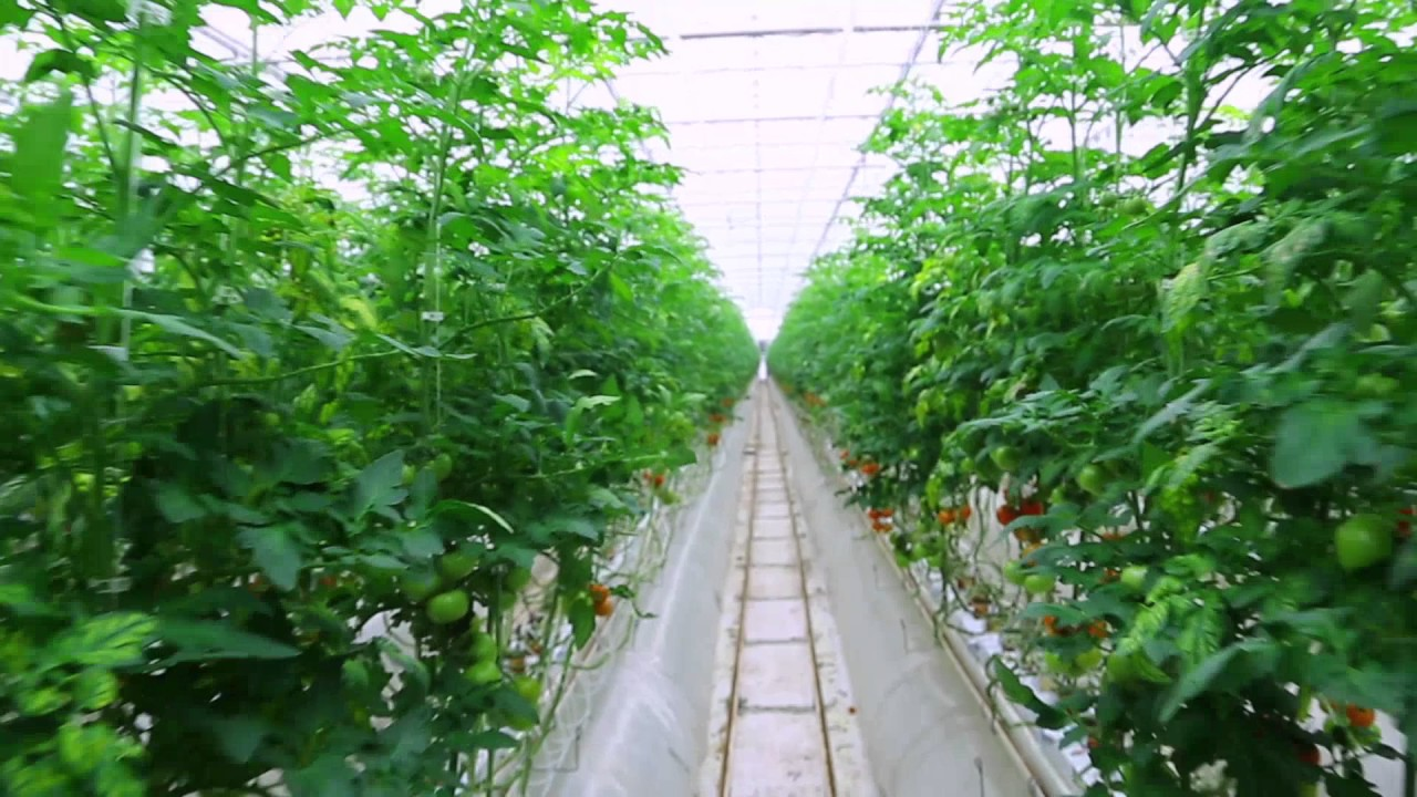 Greenleaf Nutrients – Hydroponic and Soil Nutrients