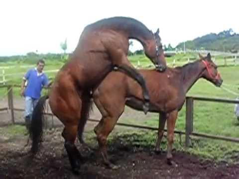 horse breeding  hahhahahahha