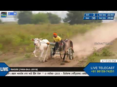 SHIFT 3 [LIVE] 🔴 AJNOUD (Ludhiana) OX RACES [16-Oct-2019]