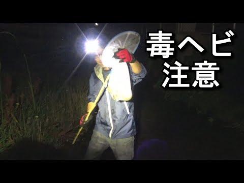 【ハブの居る川で】網と手掴みでウナギを捕って蒲焼きにする!
