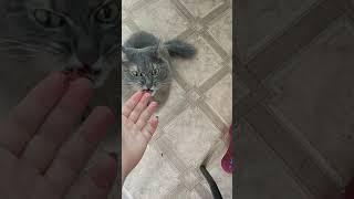 Кот ест сырую печень