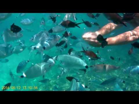 Snorkel Con Bancos De Peces En Cala En Brut, Menorca