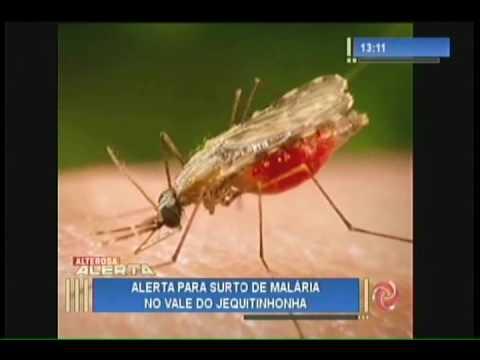 Alerta! Surto de malária em Diamantina
