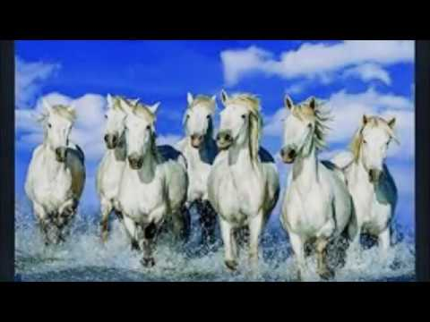Vastushastra Importance Of 7 Running Horse In Vastu Youtube