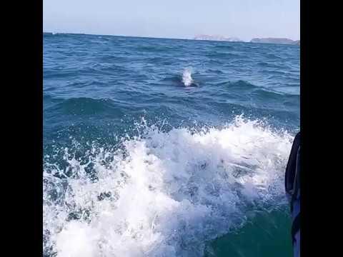 Captan manada de delfines cerca de El Morro de la Bahía de Santa Marta
