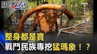 牙齒、血液、肉塊整身都是寶 戰鬥民族史前獵人專挖猛瑪象!? 關鍵時刻 20170425-5 馬西屏 王瑞德 朱學恒