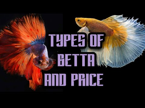 Top 12 Types Of Betta Fish And Price List In India 2020