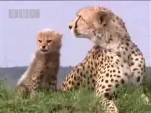 """Lo Schiaccianoci e i Quattro Regni - Clip """"Sei qui per salvarci, Clara"""" from YouTube · Duration:  1 minutes 2 seconds"""