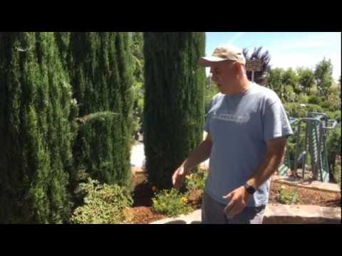 Help your plants beat the Sacramento heat