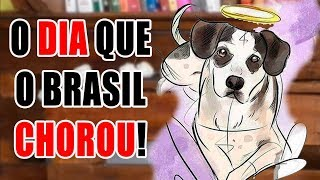 Sobre o cachorro do Carrefour - #maustratos