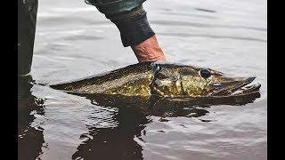 9 профессиональных советов для ловли щуки и окуня со спиннингом!