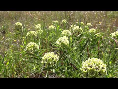 Texas Wildflower Conservation