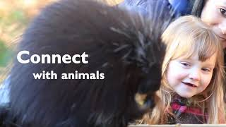 Have You Ever Connected with an Animal?