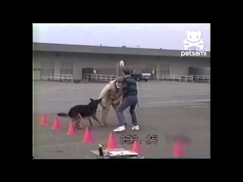 K9 training goes awry