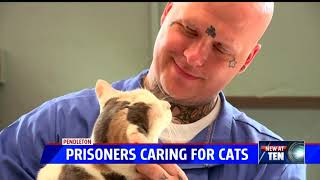 Inmates caring for cats in rehab program at Pendleton prison
