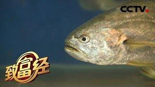 《致富经》 20190529 他投入八年 就为让鱼多活一天| CCTV农业