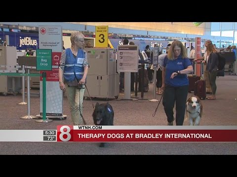 Therapy dogs to greet travelers at Bradley International Airport