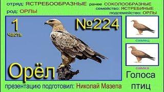 Орел. 1 часть. Голоса птиц