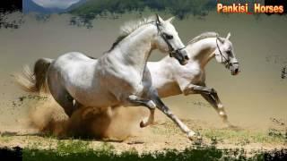 самые красивые арабские лошади / ყველაზე ლამაზი არაბული ცხენები