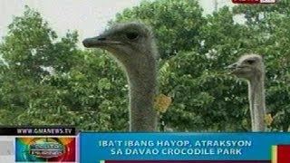 Gambar cover BP: Iba't ibang hayop, atrasksyon sa Davao Crocodile Park