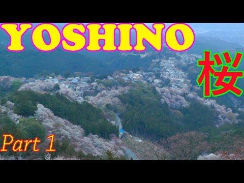 Mt. Yoshino Cherry Blossoms, Nara Part 1 🌸 吉野山●奈良 🌸 Japan As It Truly Is