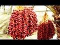 Palm Desert California - YouTube