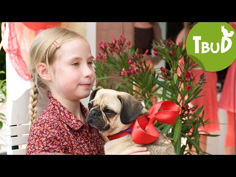 Party-Animals (Folge 30)   Tiere Bis Unters Dach   SWR Kindernetz