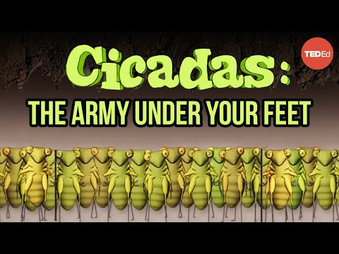 Video image: Cicadas: The dormant army beneath your feet - Rose Eveleth